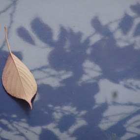 Alone by Meena Jai - Nature Up Close Leaves & Grasses (  )