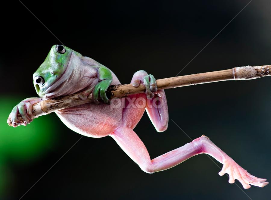 by Robert Cinega - Animals Amphibians ( , #GARYFONGPETS, #SHOWUSYOURPETS )