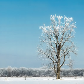 Lone Tree in Winter by Judy Soper - Landscapes Weather ( north west, winter, ohio, tree, ice, snow,  )
