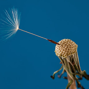 by Walter Farnham - Nature Up Close Other plants (  )