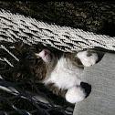 Frodo (Cat)