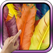 Colorful Feathers HD