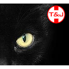 Touch and Joy Kitty icon