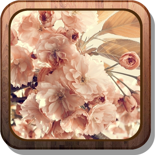 Flowers on the tree Wallpaper 個人化 App LOGO-硬是要APP