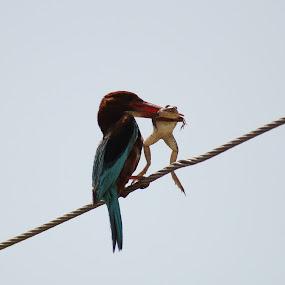 by Anthony Buongpui - Animals Birds ( birds,  )