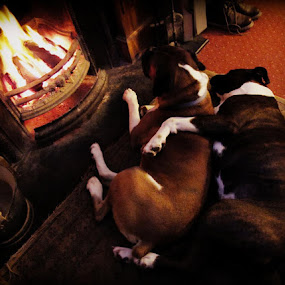 Keeping warm in the storm by Annie Japaud - Animals - Dogs Portraits ( dogs )