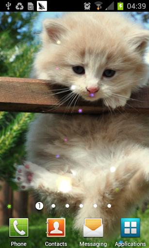 Dream Cat LiveWallpaper