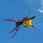 Arrow Spider