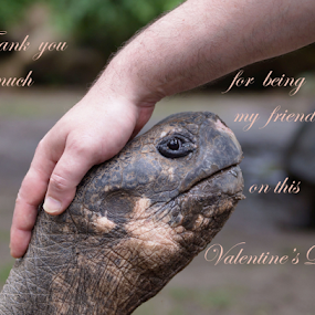 Thank you ... by Angelika Sauer - Typography Quotes & Sentences ( animals, thank you, body parts, mood, turtles, valentine, romance, emotion, love, touch, nature, hands, feeling, greetings, friendship, celebration )