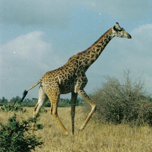 Nairobi Travel Guide & Map LOGO-APP點子