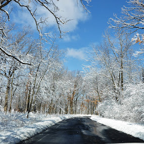 Winter Wonderland by Viana Santoni-Oliver - Landscapes Weather ( seasonal, white, forest, road, woods, winter, blue sky, blacktop, cold, nature, blue, sunny, snow, outdoor, trees, outside,  )
