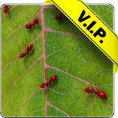 Red ants live wallpaper