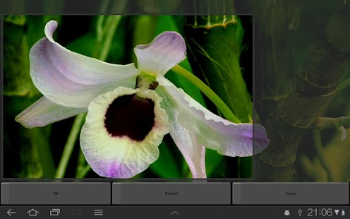 Orchid Flower Live Wallpaper - screenshot thumbnail