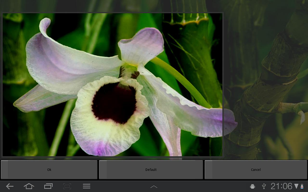 Orchid Flower Live Wallpaper - screenshot