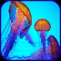 Jellyfish  Wallpaper icon