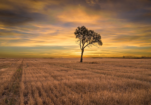 1 tree standing tall by Alan Wright - Landscapes Prairies, Meadows & Fields