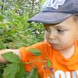 Walk for Wildlife - Canadian Wildlife Federation