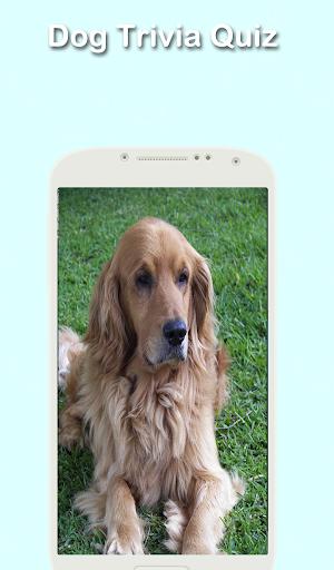 無料益智Appの犬の細事|記事Game