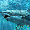 Sharks live wallpapers icon