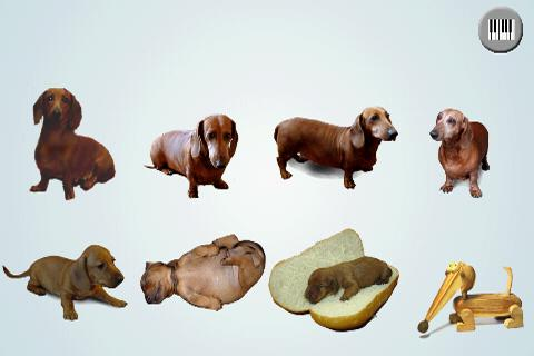 Dachshund sad song Free - screenshot