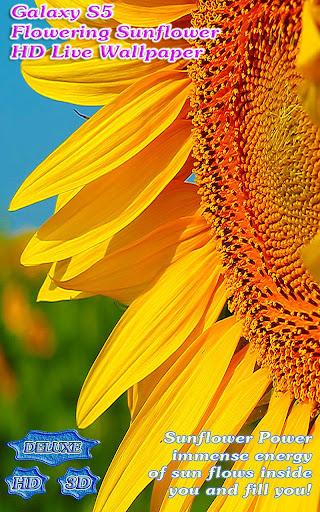 Galaxy S5 Flowering Sunflower