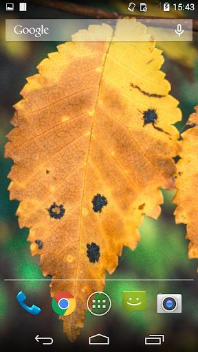 Autumn Live Wallpaper 2014
