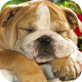 Sleeping Puppy HD
