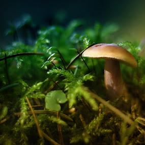 mushroom by BO LED - Nature Up Close Mushrooms & Fungi ( mushroom, macro, nature, leafs, forest,  )