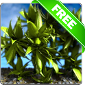 Plants in the wind free lwp icon