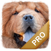 Best Dog Names Pro