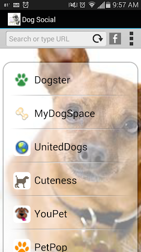 Dog Social