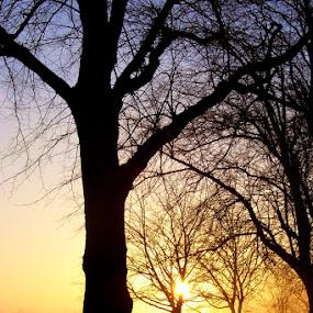 Sunrise on the Stray by John Ash - Landscapes Sunsets & Sunrises ( harrogate, orange, tree, silhouette, sunrise, stray )