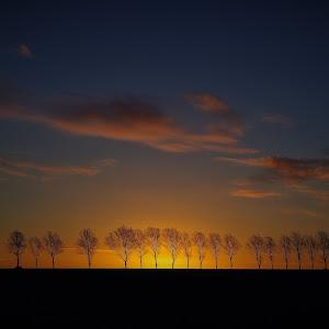 Dawn Ongar.jpg