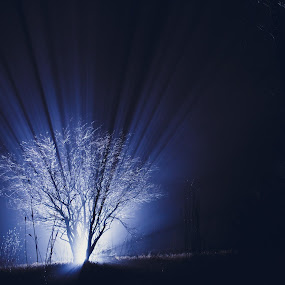 The Giving Tree by Jeffrey Zoss - Landscapes Forests ( winter, zoss photography, fog, forest, dual-iso )