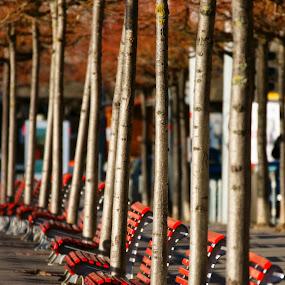 Albero, panchina, albero... by Mariateresa Toledo - City,  Street & Park  City Parks ( lugano, panchine )