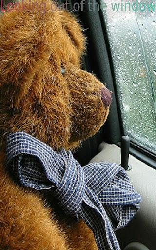 玩教育App|Teddy Bears In Action FREE免費|APP試玩