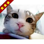 人気の猫アプリまとめ