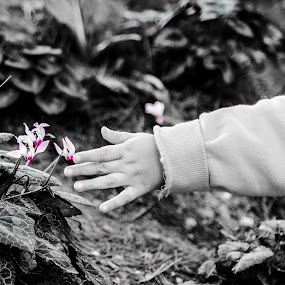 protected flowers by Alex Kapmar - Black & White Flowers & Plants ( flower )