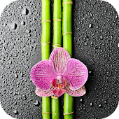 Orchid And Bamboo Wallpaper