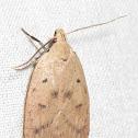 Gold-striped Leaftier Moth