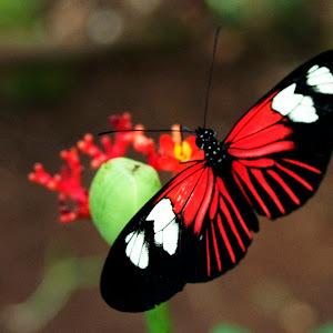 Dc Butterflies for Africa 08 Augaust 2014 (70)a.JPG
