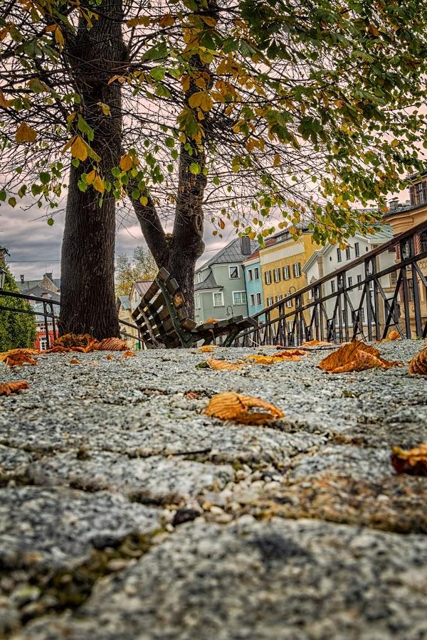 Fall is Coming by Paul Zeinert - City,  Street & Park  City Parks ( tree, leave, bench, brick, fall, kufstein, austria, sidewalk, city )