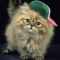 Ginger Gato Divertido LWP icon