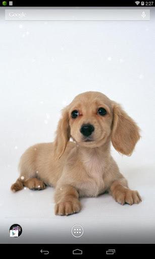 可愛狗狗動態桌布 高清