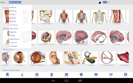 Human Anatomy Atlas Screenshot 17