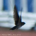 Swift/swiftlet