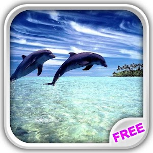 Wonderful Dolphins Water Touch