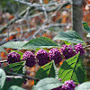 American Beautyberry (fruit)