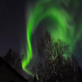by Rebecca Weatherford - Uncategorized All Uncategorized ( sky, night photography, stars, aurora borealis, aurora, night, nikon )