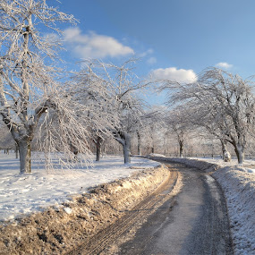 Icy Trees by James Reil - Landscapes Weather ( hdr, niagara falls, ice, trees, new york, frozen, mist )